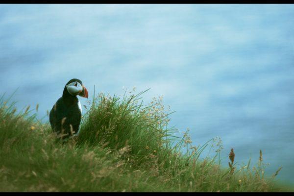 Falcor kvikmyndir og framleidsla 01